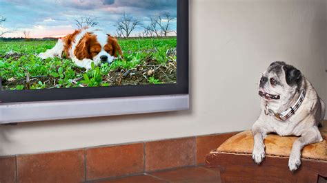 Behind DogTV–And The Question Of Whether Dogs Actually